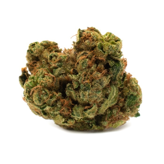 Indica - Houseplant - Dried Flower