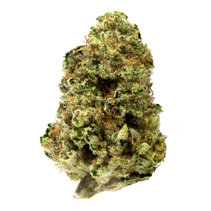 Jean Guy - 7ACRES - Dried Flower