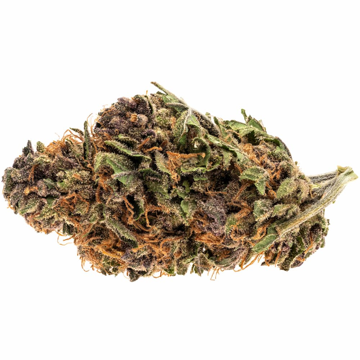 Royal Highness - Good Supply - Dried Flower