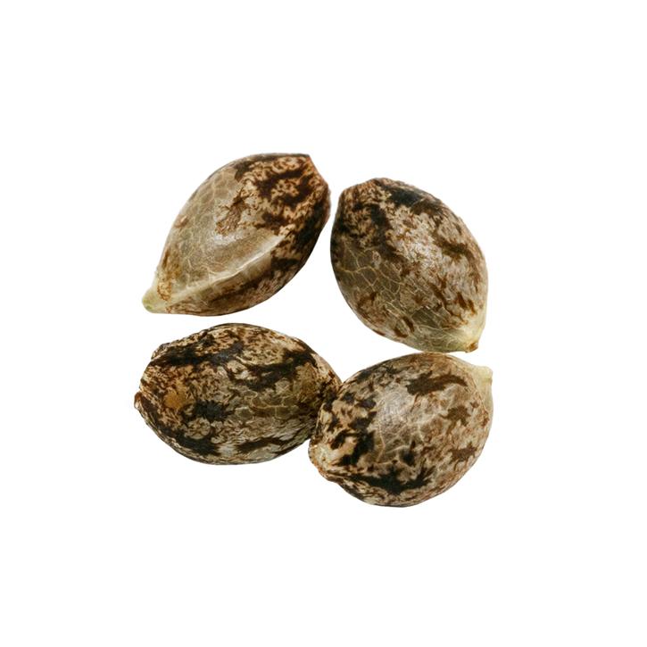 Headband - Pure SunFarms - Seeds