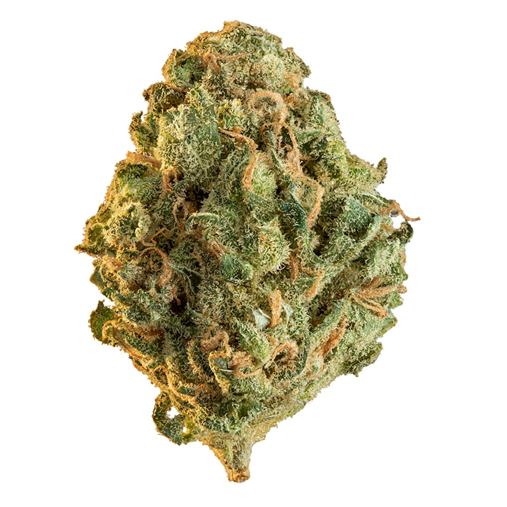 Product image of Limelight - Edison - Dried Flower
