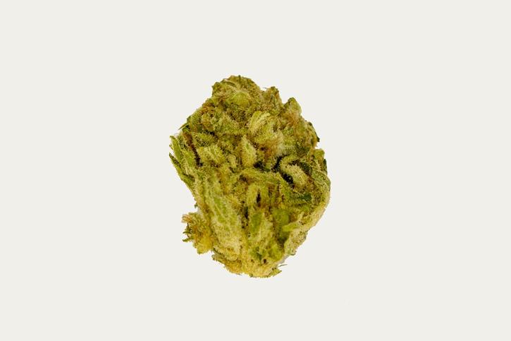 Wappa - Namaste - Dried Flower