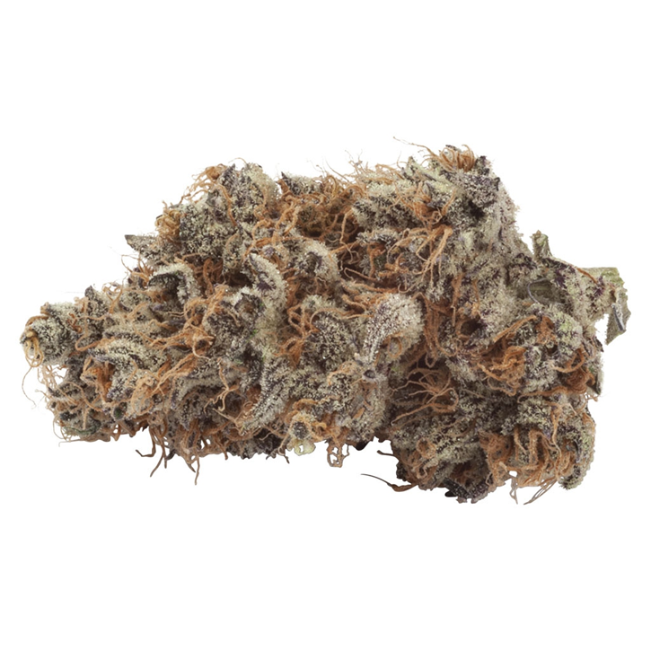 Crescendo - Natural History - Dried Flower
