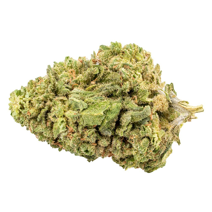 Sativa! - B!NGO - Dried Flower