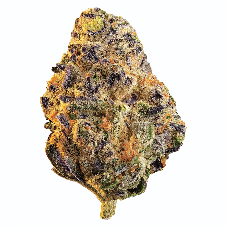 Product image of Black Cherry Punch - Edison - Dried Flower