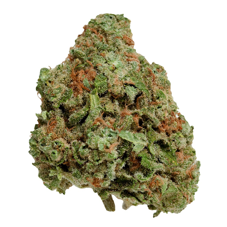 Northern Berry UP20 - UP - Dried Flower