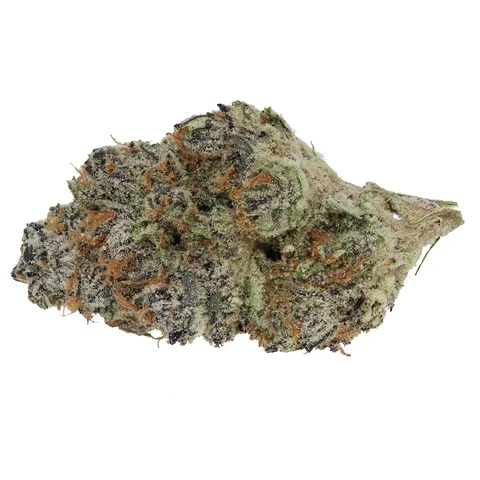 Black Cherry Punch - Elios - Dried Flower