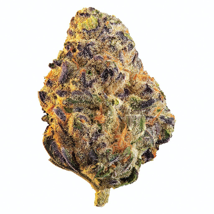 Black Cherry Punch - Edison - Dried Flower
