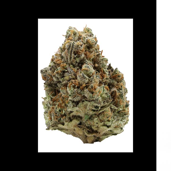 Amnesia x Super Haze - Thumbs Up - Dried Flower