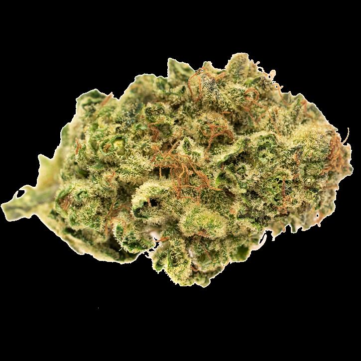 Gather - Solei - Milled Flower