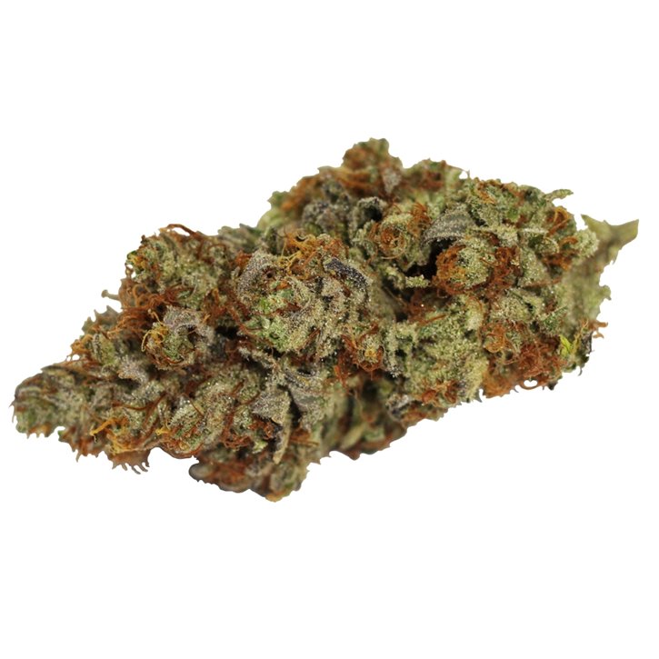 Tangerine Cookies - WINK - Dried Flower