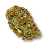 Shooting Star - Haven St. - Dried Flower